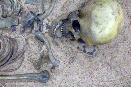 History of middle ages. Skeleton (skull, cranium) of young warrior from settlement of 10th-11th centuries