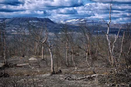 forest-tundra turned into desert after contamination of soil and air by metallurgical plant, subsequent fires