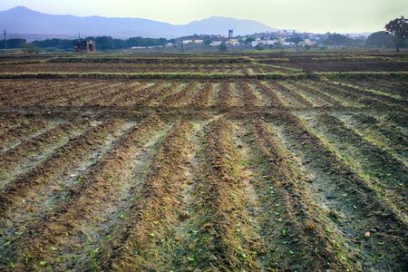 Spring farming in South Asia. Planted with rice checks not yet filled with water.