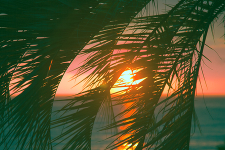 Promise of heavenly rest. Sunset through leaves of palm trees on Indian ocean, Tropical journey. Well recognizable images that trigger positive emotions Stock Photo