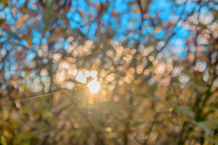 Play of light at forest sunset. Natural diffraction grating. As result of interference is increased, or damping of light waves in certain areas (diffraction) Stock Photo