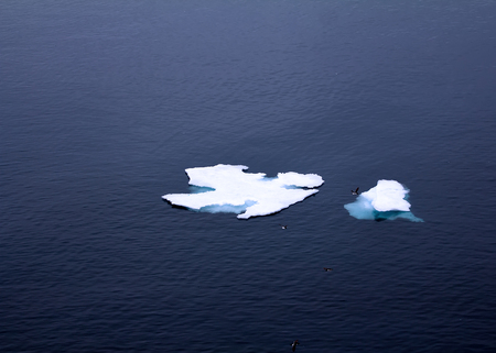 Individual drifting ice floes in Barents sea. Souththern of 80 degrees latitude. Guillemots and gulls resting on ice 스톡 콘텐츠