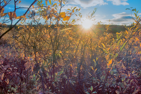 Autumn in Arctic circle. Low sun before Arctic winter, trees and bushes lose last yellow leaves, cold sun Stock Photo