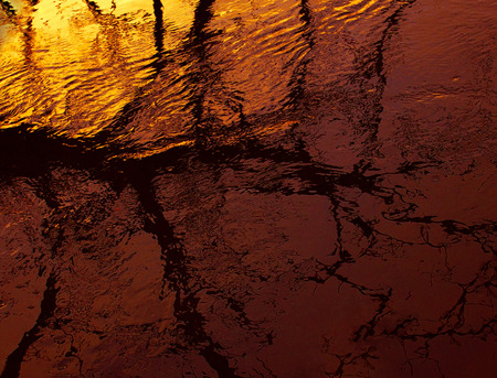 branches of tree against sunset and reflection in water, bright sunset Stock Photo