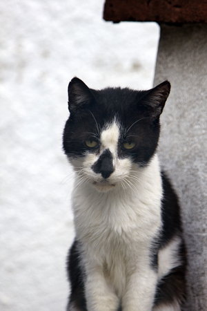 Stray cat on roof. Poor skinny cat with asymmetrical black-and-white coloring that enhances ugly, unhappy cat 스톡 콘텐츠