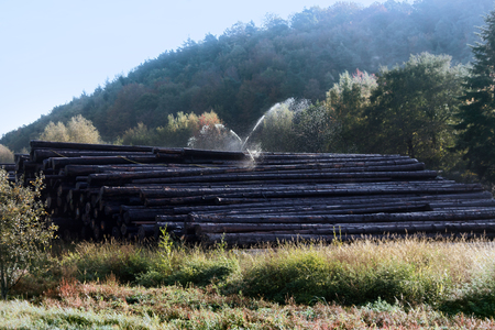 Water pile of logs (stack of logs, log deck). Sprinkler irrigation as way of preserving wood - creating microclimate and oxygen-free environment for fungi and forest pests. Wood industry in France Stock fotó
