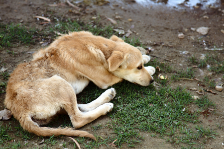 Stray dog on ground, top view. Rescue and shelters for homeless animals. Made boarding home for dogs. Concept: we are responsible for animals, compassion, humanity