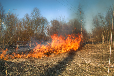 Prairie fire. Dry grass blazes among bushes, fire in bushes area. Fire in shrub kills huge number small animals, especially insects. Climate change, increased frequency fires, destruction of forests Archivio Fotografico