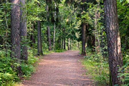 recreational forest in Finland, municipal forest; wood-meadow; park and forest road, stroll, walk, mixed forest, mixed wood