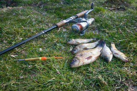 Fishing for white carp, Prussian carp, crucian carp in north ponds. Fish medium and small, coarse fish; nuisance animals