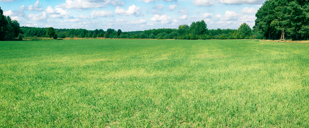 Hayfields are interspersed with lovely curly groves - a suitable landscape for a resident of Central Europe, native land