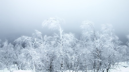 Siberian frosts. The pigmy trees bent under the pressure of the North cold wind, frost and snow