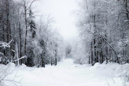 Charming winter landscape. Trees in the forest are covered with frost and snow, snow under. Forest toboggan and ski road