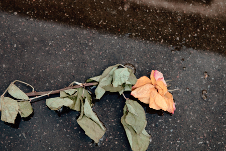 rose of lost love trampled on road. unnecessary, unfulfilled hopes and feelings concept 스톡 콘텐츠