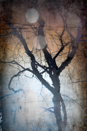 The reflection of the naked trees and hazy sun in the puddle, dead air. Inverted autumn image