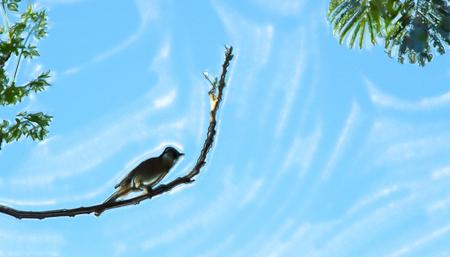 Bulbul on branch against blue sky Stock Photo