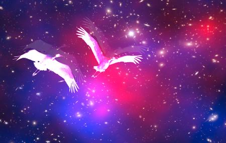 Star birds. Fantasy