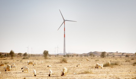 Indian energy. Wind turbines in the desert in Rajasthan and white rune sheep in the foreground 免版税图像