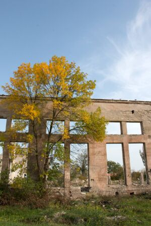 Green living tree on the background of a gloomy destroyed building. Violence of life and destruction