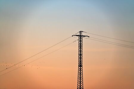 Power line post and lot of jackdaws sitting on wires and gulls fly Stock Photo