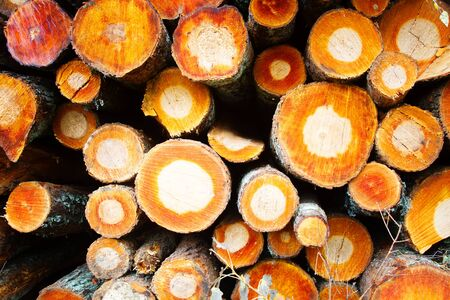 Stacks of freshly cut wood (woodpile, stacking of round wood). Timber industry. Alder timber and log yard