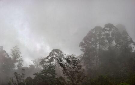 Geography, synecology. Tropical jungle in cloud haze (silvagenitus). Nephelohylea (cloud forest) - wet evergreen mountain forest, which grows in condensation of mists. Special plants live. Sri Lanka