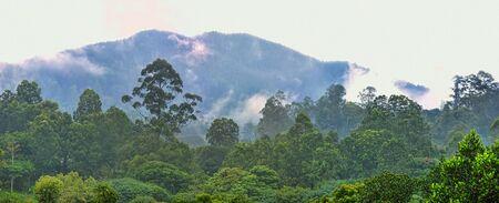 Geography, synecology. Tropical jungle in cloud haze (silvagenitus). Nephelohylea (cloud forest) - Dipterocarpus tree, Mesua and Shorea community. Special plants live. Sri Lanka Banco de Imagens