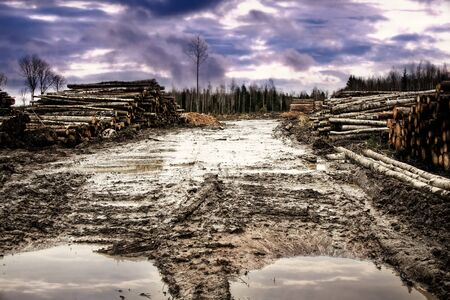 Barbaric deforestation. Clear felling, roads are broken by caterpillar equipment, felling remains thrown on cutting area or are raked in waste heaps by bulldozer. Anxious sky. Russian boreal forests Stock Photo