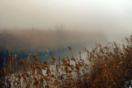 The reed panicles are filled with moisture and drops of rain on the banks of the misty river. Winter silent river, crude weather Stock fotó