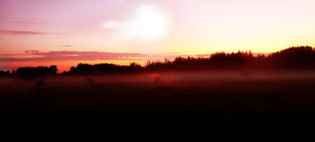This is the so-called Northern White night (nightless night), when dawn in West meets dawn in East. Woodland in circumpolar region. Sunset with forest and fog