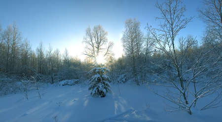 Winter forest on a Sunny day. Low position of the sun, thick snow cover (blanket of snow) and frost on the trees, winter postcard