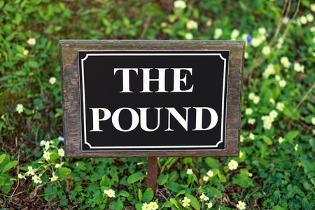 the pound street sign on flower background.