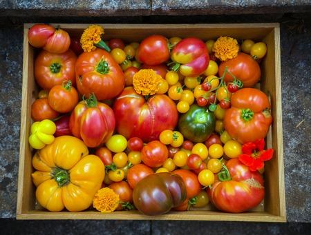 Freshly picked heirloom tomato harvest: pear shaped, beef heart, tigerella, brandywine, cherry, black put In wooden box with edible nasturtium amd marigold flowers