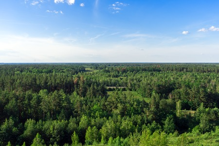 Beautiful vibrant background of spruce and pine forest with blue sky Zdjęcie Seryjne