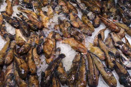 Bullhead Goby fish on ice for sale