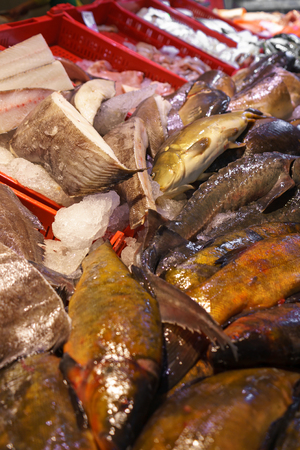 fresh fish for sale on seafood market