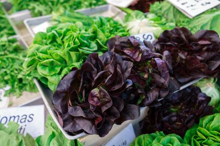 freshly picked whole lettuce varieties on farmers market Banco de Imagens