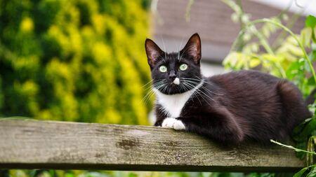 portrait of black and white cat sitting on the garden pergola Zdjęcie Seryjne