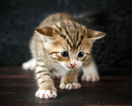 beautiful tiny baby tabby kittens with stripy fur