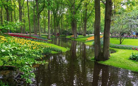 tranquil water canal in a lush Beautiful green woodland garden with dense foliage Zdjęcie Seryjne