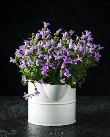 Campanula flowers growing in decorative vintage jug.
