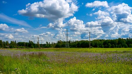 Flowering wild flowers Meadow with blue sky in summer and power lines at the background.