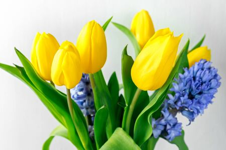 Close up Bouquet of hyacinths and yellow tulips.