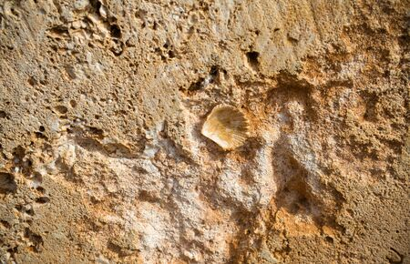 Limestone wall with sea shell in Menorca island.