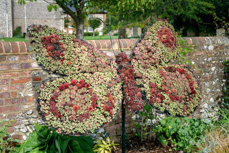 A butterfly statue made of succulunts plants in english park in Amersham 스톡 콘텐츠