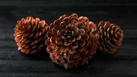 ripe open Pine cones on wooden table background
