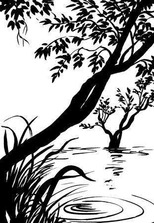 canne: illustrazione, schizzo di natura, palude, albero, fiume, lago