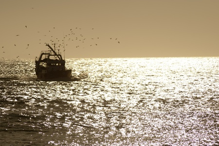 seabirds: fishing boat returning to harbor being swarmed by sea birds during sunset.
