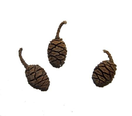 mini pinecones isolated on white backround stock photo