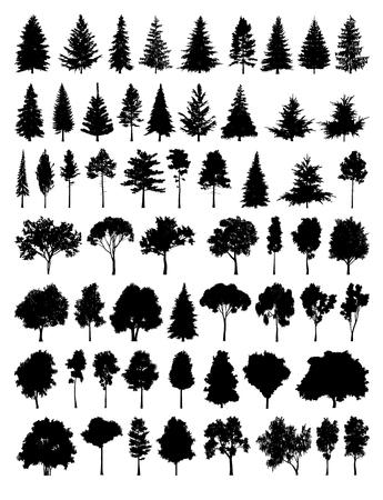 Set Silhouette Baum Standard-Bild - 65050860